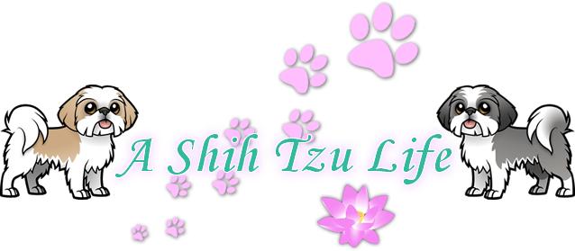 A Shih Tzu Life